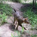 馬達加斯加島上貓的秘密
