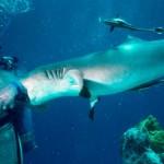 從電影大白鯊到鯊魚保護者