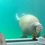 想和海象共眠嗎?試試比利時水中飯店