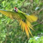 哥斯大黎加,發展自然觀光的典範
