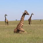 非洲十大野生動物之旅
