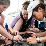 完全由女性組成的海洋保育隊