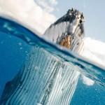 挪威對鯨魚肉的需求量日益加增