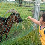 帶孩子到充滿細菌農場走走   4招必備清單,一家人安心遊