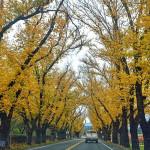 十個在地人推薦的加州秋景