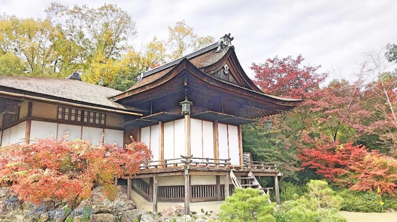日本嵐山秋葉情