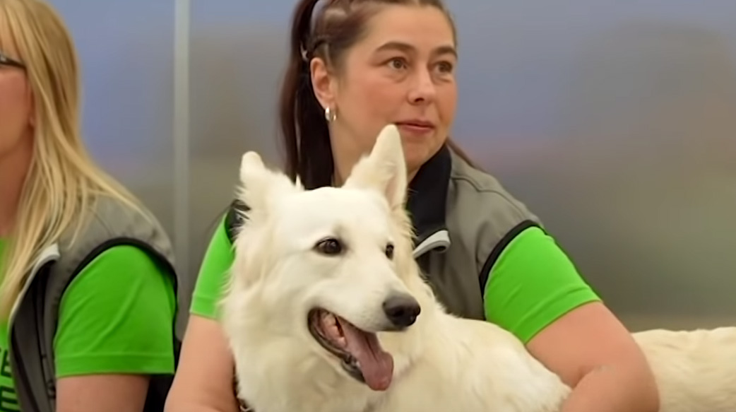 赫爾辛基機場使用嗅探犬檢測Covid-19