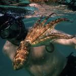 與章魚當好朋友的男人