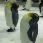 東北冰雪(三五) 大連星海廣場、聖亞海洋世界