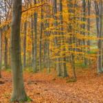 氣候危機使秋葉更早掉落