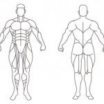 肌肉要如何搭配訓練才能有效果呢?