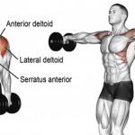 如何練出你的麒麟臂、天鵝臂呢?