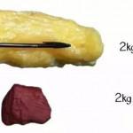 肌肉與脂肪如何影響我們?