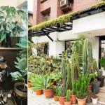 【喧囂城市裡的舒心解方】逛台北 3 間植栽專賣店,為自己的家造一隅「綠色秘境」