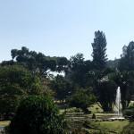 爪哇驚奇(十一) 茂物植物園(下)