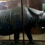 爪哇驚奇(十二) 茂物動物博物館