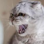 【狗派和貓派之爭】最新日本研究:貓的表現顯示對善良人類無感,因為「食物就是食物」
