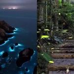 【季節限定絕美景點】2021「春季旅行」5 大推薦:到馬祖追藍眼淚取決月亮、賞螢火蟲有最佳時段⋯⋯