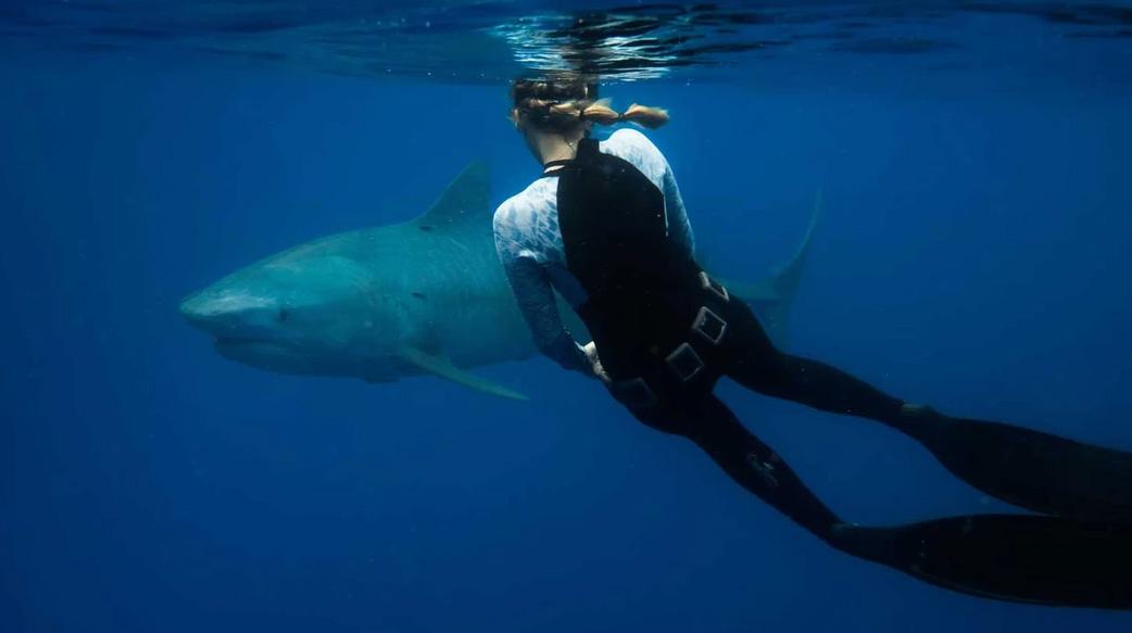海裡玩水如何免受鯊魚傷害?