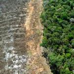 全世界只剩3%生態系統保持完好
