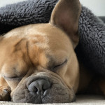 家裡的貓狗睡得好嗎?