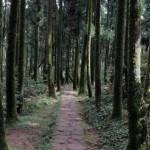 【台灣也搶到全球第一認證】「國際寧靜公園」超嚴格尋覓靜謐聖地!呼籲人們珍惜疫情帶來的「寧靜」