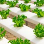 想改變中國飲食習慣的新創公司